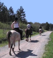Horse riding in Arques, South France