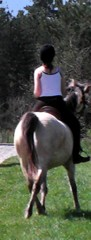 Horse riding lessons in South France